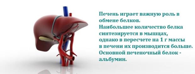 Альбумины норма в крови: низкий, понижен, причины, что это значит