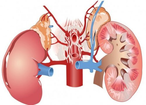 Амилоидоз почек: симптомы, диагностика, при амилоидозе