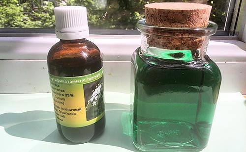 Болиголов: лечебные свойства и противопоказания, пятнистый, трава