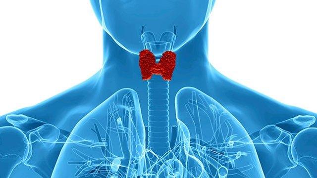 Как сдавать кровь на гормоны щитовидной железы: анализы