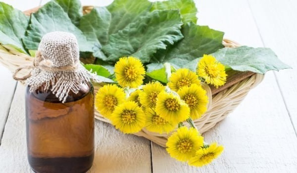 Мать-и-мачеха: лечебные свойства и противопоказания, трава