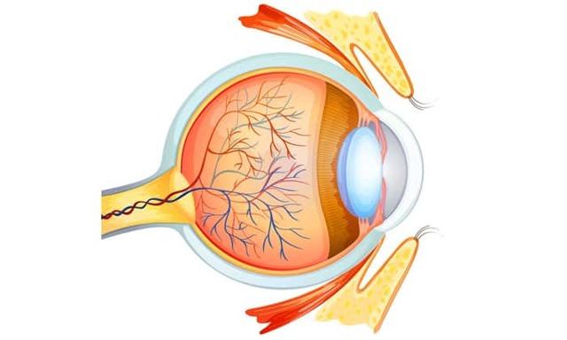 Передняя ишемическая нейропатия зрительного нерва: лечение, глаза