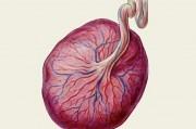 Экстракт Плаценты: инструкция по применению, в ампулах