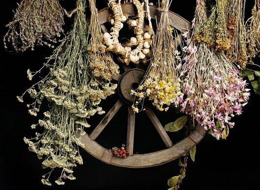 Сбор лекарственных трав: целебных, календарь по месяцам