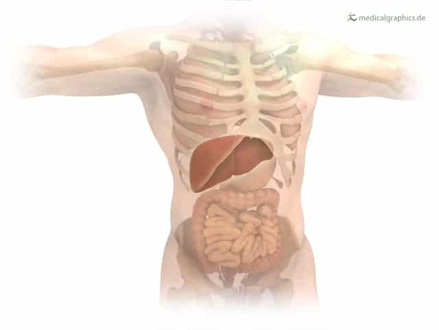 Жировая дистрофия печени: симптомы и лечение, причины