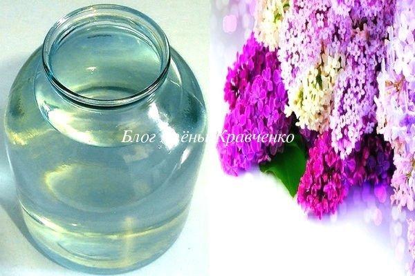 Настойка сирени: на водке, применение для суставов, спиртовая