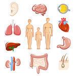 Заболевания поджелудочной железы: симптомы и лечение, овёс
