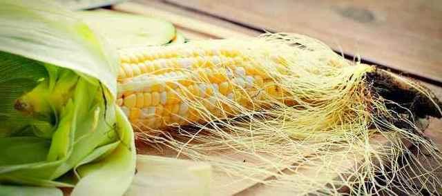 Кукурузные рыльца: лечебные свойства и противопоказания
