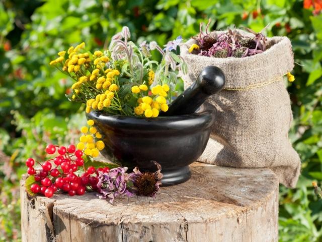 Почечный сбор: инструкция по применению, для почек, состав трав