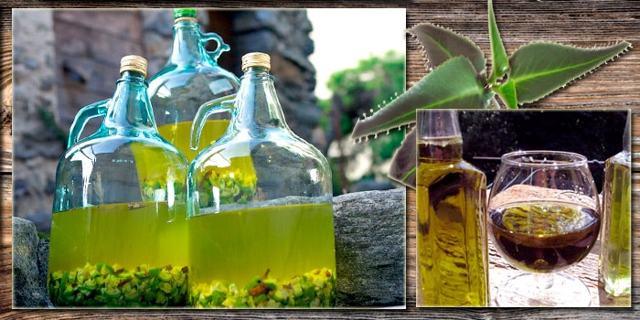 Настойка Каланхоэ: на водке, применение, как сделать