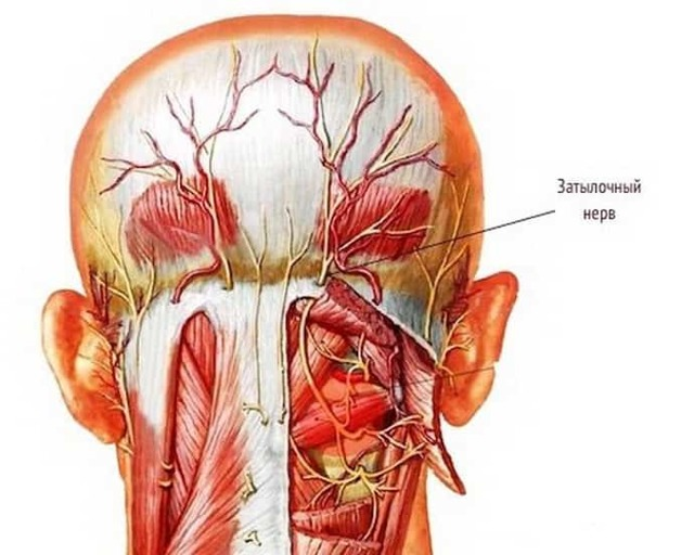 Невралгия затылочного нерва: симптомы и лечение, ЛФК