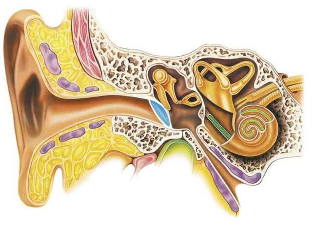 Как вылечить шум в ушах: можно ли восстановить снижение слуха