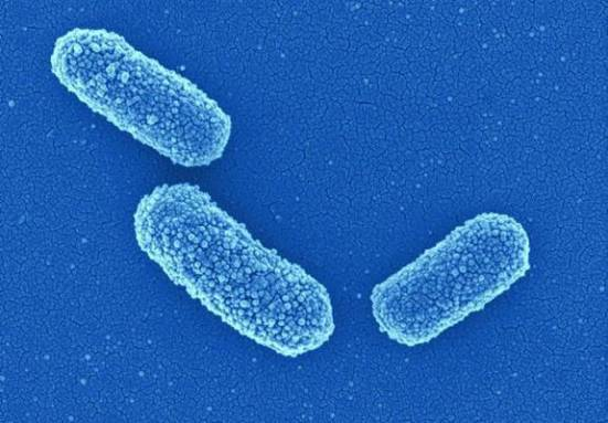 Клебсиелла пневмония: в моче, мазке, klebsiella pneumoniae